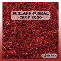 live_1604992712_Pushal_Crop_2020.jpg